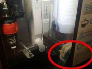 Un topo dentro a un distributore di bevande all'interno della stazione Termini di Roma