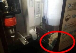 """Roma, la denuncia: """"C'è un topo dentro la macchinetta del caffè alla stazione Termini"""""""