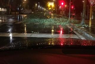 Allerta per forte vento a Roma e nel Lazio: i danni provocati dal maltempo
