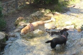 Roma, i cani non possono fare il bagno nelle fontane: multa per i padroni