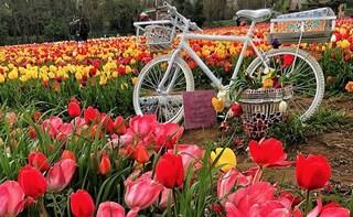 Parco dei Tulipani, l'inaugurazione ufficiale giovedì 21 marzo: tutte le info utili