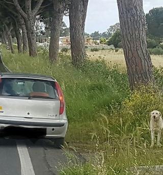 Latina, cane abbandonato dal padrone in strada: è caccia all'uomo autore dell'ignobile gesto