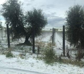 Grandinata record a Latina: distrutte vigne e campi. Danni per milioni di euro