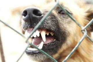 Frosinone, bimbo di tre anni ferito, morso alla testa da un cane: soccorso in eliambulanza