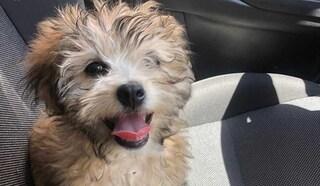 Lite furiosa tra condomini per la pipì del cagnolino: 63enne muore di infarto, l'altro arrestato