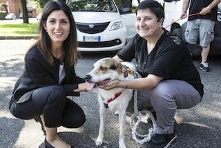 """Roma, Raggi lancia la campagna contro l'abbandono dei cani: """"Disumano e anche un reato"""""""