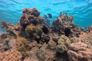 Ostia, nel mare di Roma si nasconde una barriera corallina