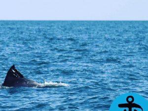 Foto Associazione Sotto al Mare