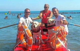 Ostia, gruppo di adulti e adolescenti rischia di annegare in mare: i cani bagnini li salvano