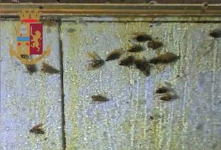 Chiuso un noto ristorante a Ostiense: insetti, sporcizia e congelatori nelle stanze del personale
