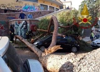 Albero cade alla Garbatella e si abbatte su tre auto: strada chiusa e bus deviati