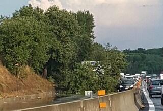 Albero cade e travolge un'auto: via Pontina bloccata, traffico e code verso Roma