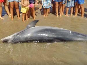 Il delfino spiaggiato a Sauri di Minturno