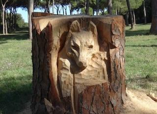 Spunta una testa di lupa a Villa Pamphilij: il tronco di un pino abbattuto diventa una scultura