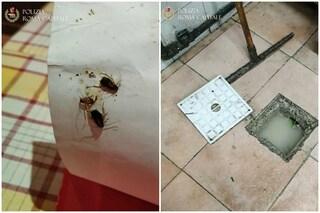 Roma, sporcizia e decine di scarafaggi in cucina: sequestrato ristorante vicino a piazza Bologna