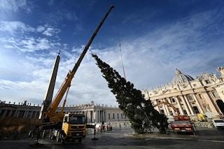 Albero di Natale 2019 a Piazza San Pietro, viene dal Veneto: un omaggio dei nubifragi