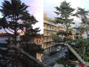 L'albero dei pappagalli all'angolo tra via Bartolomeo Platina e via della Caffarelletta, con i vigili del fuoco in azione.