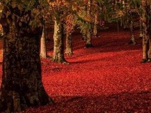 L'autunno sul Monte Livata, foto di Andrea Angelucci
