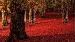 Tutta la bellezza dei colori dell'autunno nei boschi a un'ora da Roma