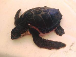 La tartarughina Camilla