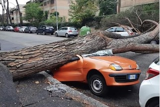 Mostacciano, albero crolla in via Leonardo Umile: distrutta un'auto