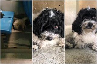 """Tante chiamate per il cane trovato nel bus: """"Non c'è solo Filippo, ci sono 560 cuccioli da salvare"""""""