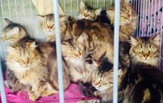 Roma, muore una gattara, viveva con settanta mici. Ora cercano casa