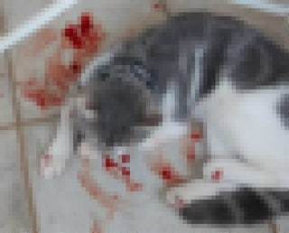 Gatto incatenato e maltrattato, violenza sugli animali a Latina