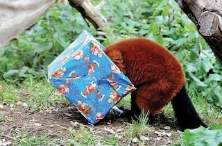 Natale al Bioparco di Roma: dall'8 dicembre al 6 gennaio, info su orari ed eventi speciali