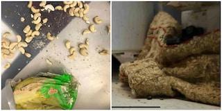Ostiense, cucina da incubo in un ristorante: formiche negli alimenti mal conservati