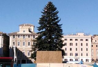 Natale a Roma, domenica 8 dicembre alle 19 verranno accese le luci di Spelacchio
