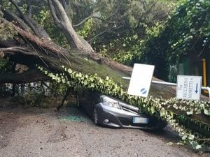 L'albero caduto su un'auto in zona Cassia