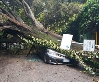 Allerta meteo: alberi caduti per il vento forte, sulla Cassia distrutta un'auto