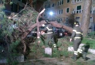 Corso Trieste, pino crolla e si schianta contro auto in corsa: una donna in ospedale