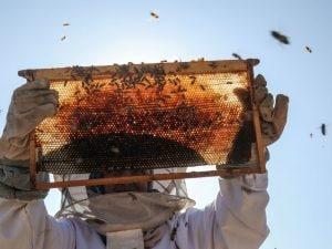Un apicoltore