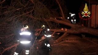 Via Aurelia, albero cade su auto in corsa: 2 giovani ferite, pompieri le hanno estratte da lamiere