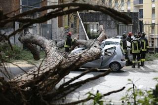 Roma, cade un albero a causa del vento fortissimo e travolge un passante: ferito