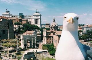 Elezioni suppletive a Roma: un'occasione persa per discutere del futuro del centro storico