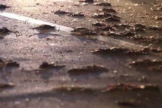 Albero crollato al Policlinico, il giorno dopo lasciate in strada buste piene di uccelli morti
