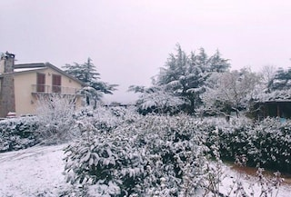 Neve nel Lazio: candidi fiocchi imbiancano i Castelli Romani e il Viterbese