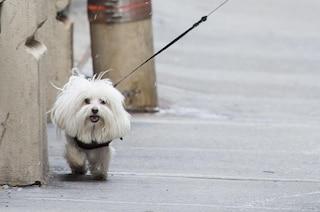 """Si giustificano così: """"Portiamo a passeggio i cani"""". In realtà è una scusa per spacciare"""