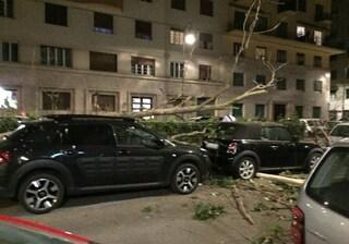 Rami e alberi caduti a Parioli e Flaminio su auto in sosta e binari del tram