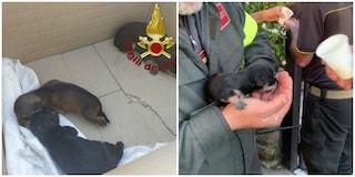 Getta cuccioli appena nati in un cassonetto, Vigili del Fuoco li salvano da morte certa