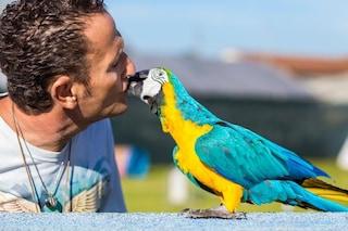 """Enzo Salvi a Fanpage.it dopo l'aggressione: """"Pensavo che il mio pappagallo fosse morto, ho pianto"""""""