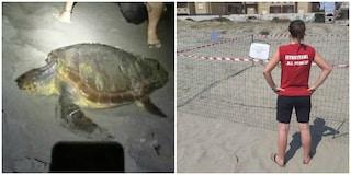 Tartaruga Caretta caretta depone 100 uova a Torvaianica: è la seconda volta in 5 anni nel Lazio