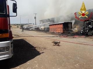 Incendio sull'Ardeatina, azienda agricola in fiamme: Vigili del Fuoco salvano gli animali
