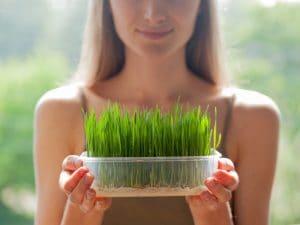 wheatgrass