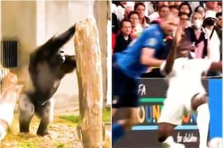 """Il """"gorilla italico"""" Chiellini protagonista di Superquark: """"Quando lo vedete caricare, scappate"""""""