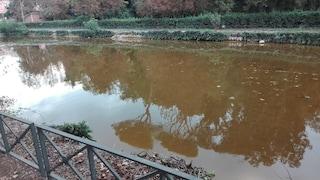 """Il laghetto di Villa Ada è marrone e puzza: """"Non c'è ricircolo d'acqua ma nessuno interviene"""""""