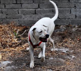 Joda viene rapita per fare cuccioli da vendere, 6 anni dopo scappa e torna dalla sua padrona